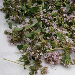 sběr bylinek na sušení